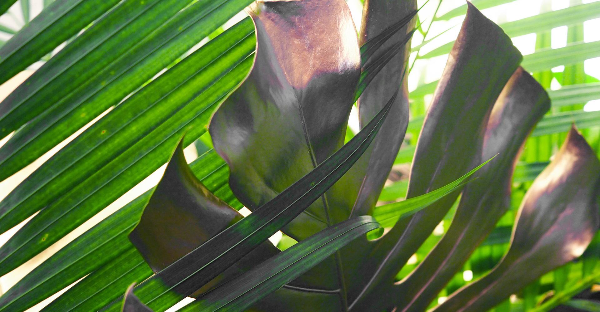 wta-leaves